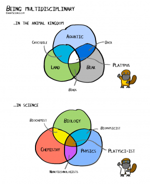 Examples of being multidisciplinary, an infographic